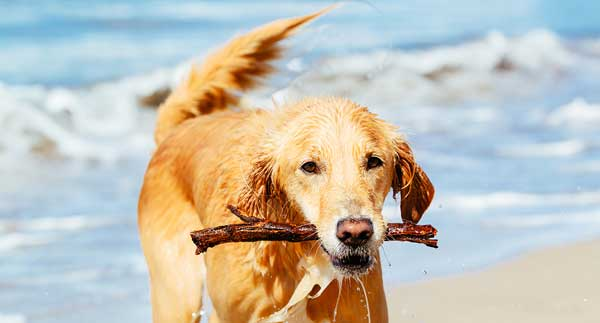 Pet Trusts